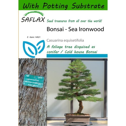 Saflax  - Bonsai - Sea Ironwood - Casuarina Equisetifolia - 200 Seeds - with Potting Substrate for Better Cultivation