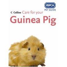 Care for your Guinea Pig (RSPCA Pet Guide) (Paperback)
