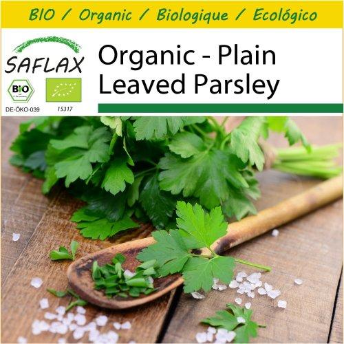 SAFLAX Potting Set - Organic - Plain Leaved Parsley - 600 certified organic seeds  - Petroselinum