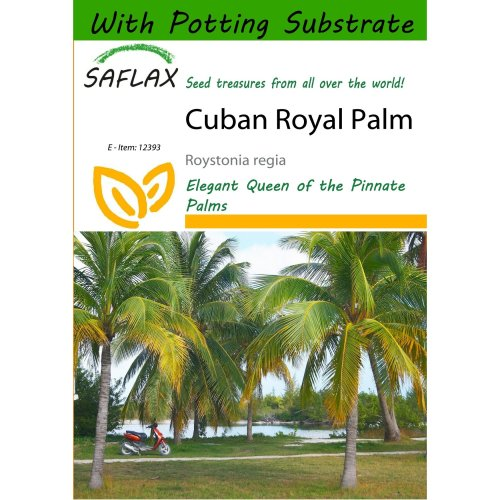 Saflax  - Cuban Royal Palm - Roystonia Regia - 8 Seeds - with Potting Substrate for Better Cultivation