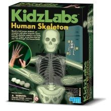 Human Skeleton Set -  Kidz Labs Children's Creative Set