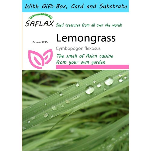 Saflax Gift Set - Lemongrass - Cymbopogon Flexosus - 50 Seeds - with Gift Box, Card, Label and Potting Substrate