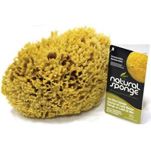 Acme Sponge & Chamois SW1-6070C Seawool Sponge 6 - 7 In.1 Cut