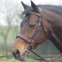 Cottage Craft Cambridge Bridle With Rubber Reins: Havana: Pony