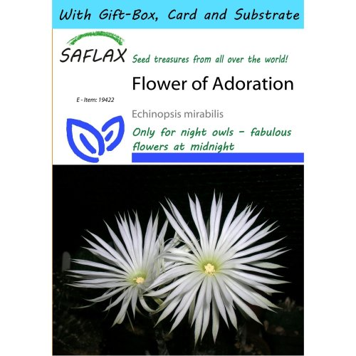 Saflax Gift Set - Flower of Adoration - Echinopsis Mirabilis - 40 Seeds - with Gift Box, Card, Label and Potting Substrate