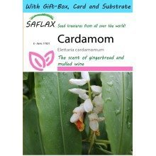 Saflax Gift Set - Cardamom - Elettaria Cardamomum - 10 Seeds - with Gift Box, Card, Label and Potting Substrate
