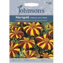 Johnsons Seeds - Pictorial Pack - Flower - Marigold (French) Jolly Jester - 75 Seeds