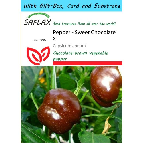 Saflax Gift Set - Pepper - Sweet Chocolate X - Capsicum Annum - 10 Seeds - with Gift Box, Card, Label and Potting Substrate