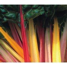 Vegetable - Beet Leaf Chard - Rainbow Mixed - 50 Seeds
