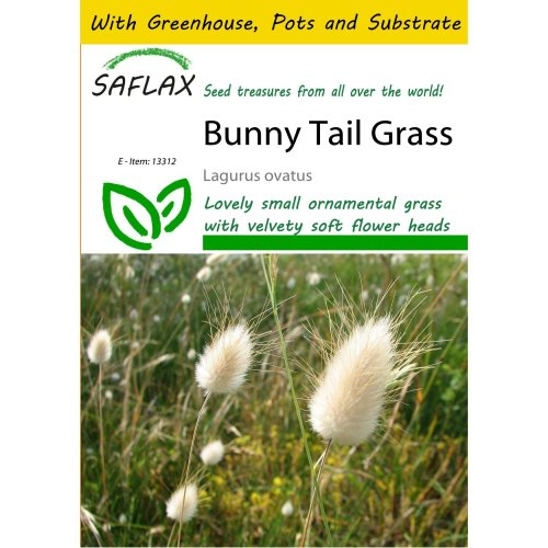 SAFLAX Potting Set - Bunny Tail Grass - Lagurus ovatus - 100 seeds - With mini greenhouse, potting substrate and 2 pots