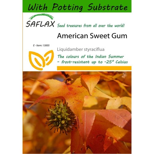 Saflax  - American Sweet Gum - Liquidamber Styraciflua - 100 Seeds - with Potting Substrate for Better Cultivation