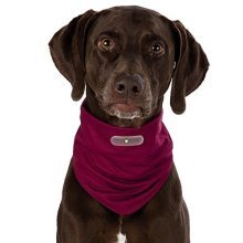 Insect Shield® Dog Loop - Invisible, Odourless Insect Protection (m-l - Neck 42 -  dog insect shield loop sizes